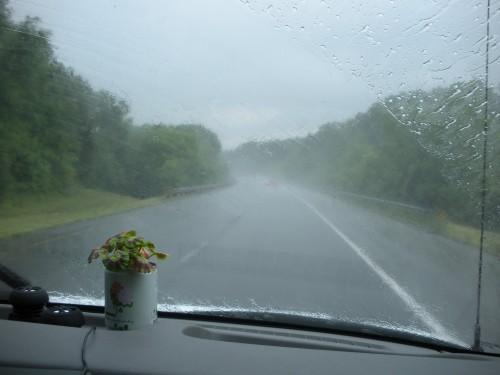 Our geranium riding the dash in a rain storm in the Blue Ridge Mountains.